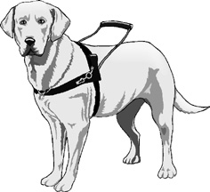 Ada law re service dogs